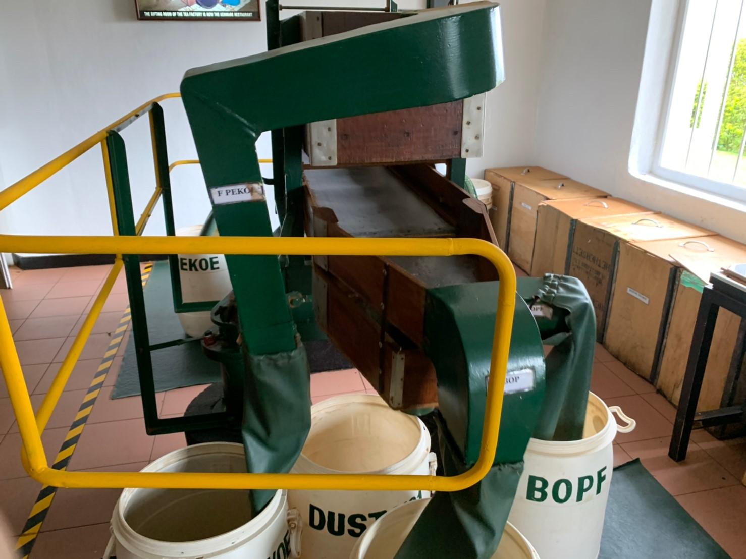 紅茶の製造工程