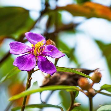 シンハラジャ森林保護区の固有植物