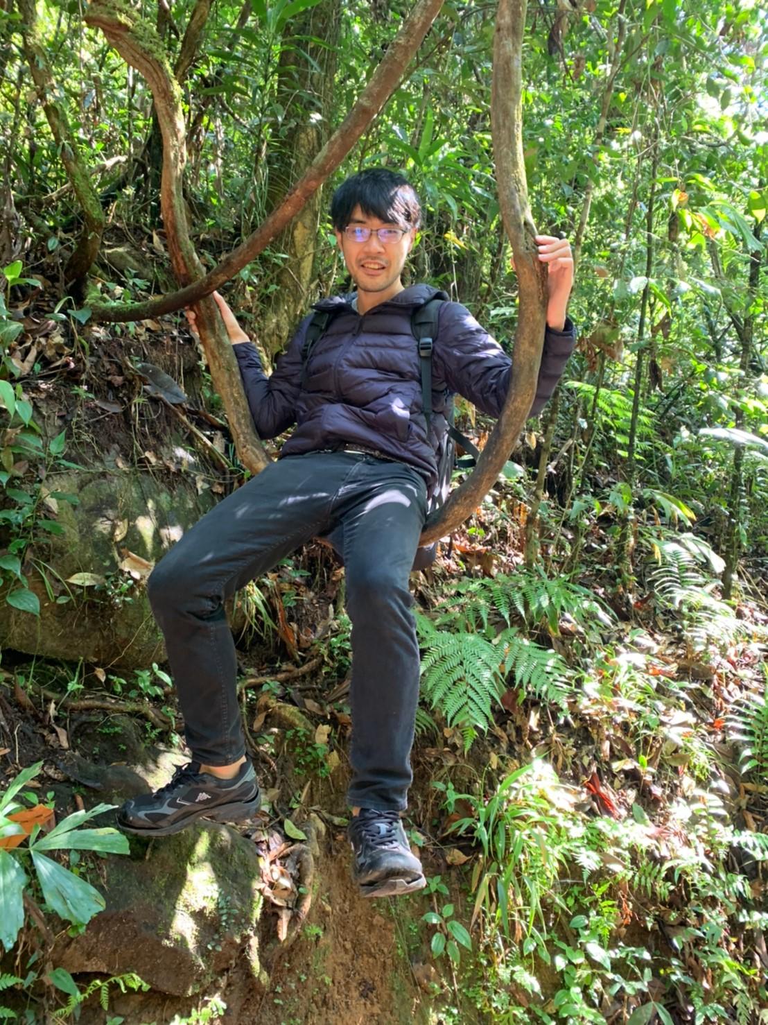 シンハラージャ森林保護区の木